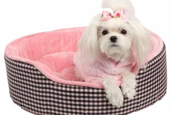 Dog Beds Online