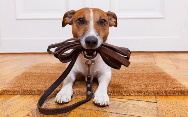 Dog and a Lead