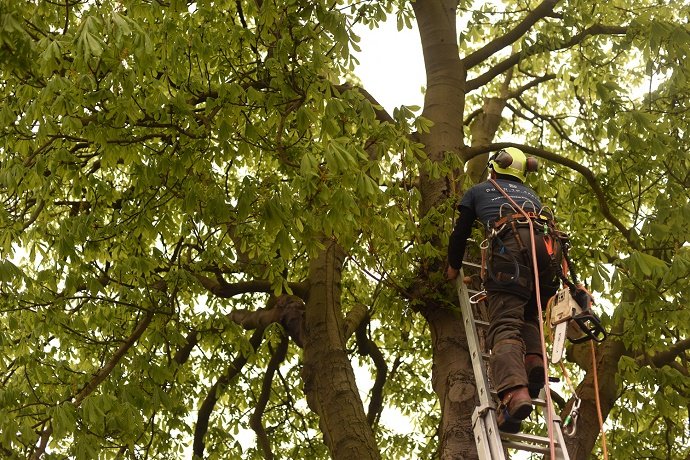 tree-safety-inspection