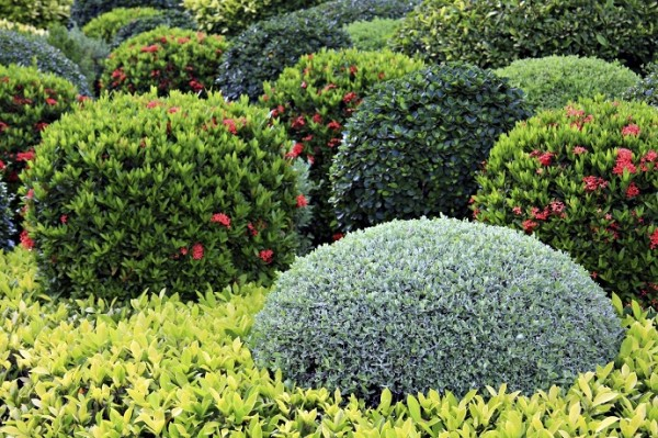 shrubs and bushes