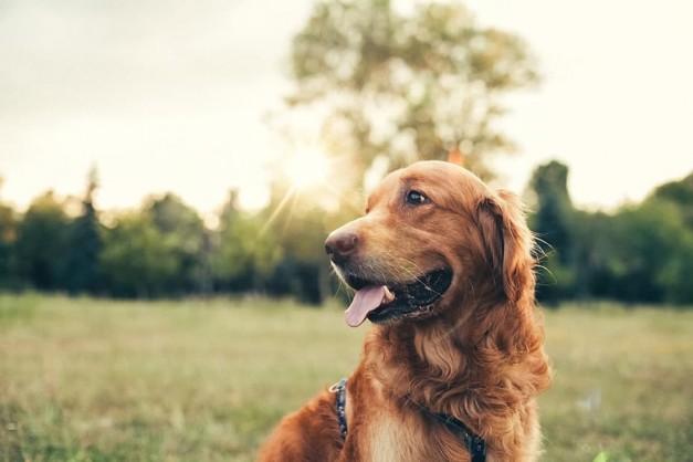 dog-nature