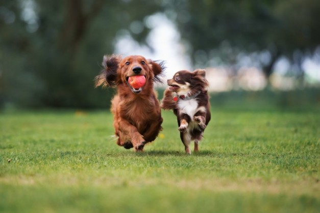 dogs-running-products