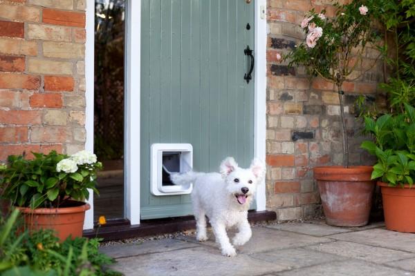 Door for Dogs