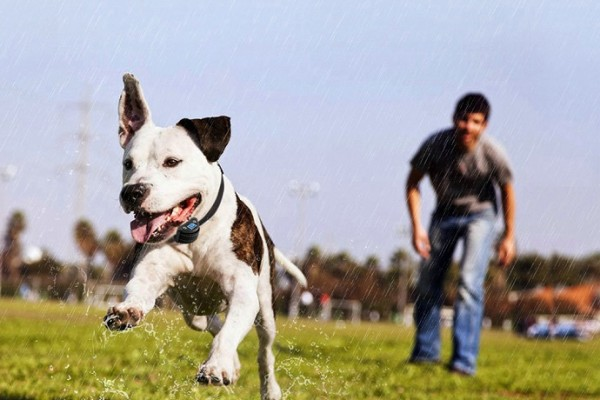 dog-bark-control-device