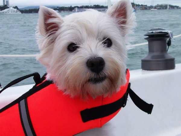 Choosing a Life Vest for Your Dog