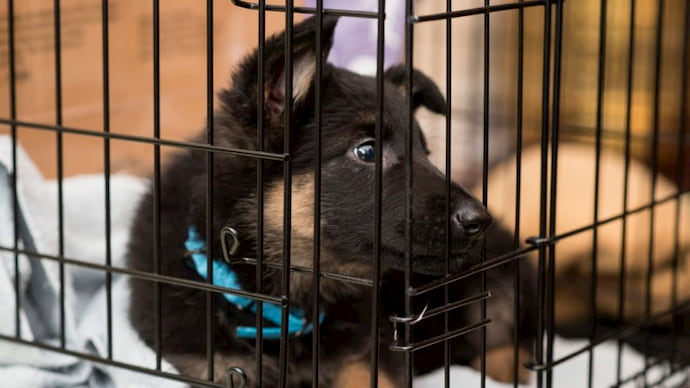 black dog with dogs cage