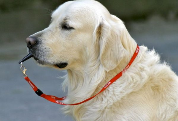 using silent whistles with your dog