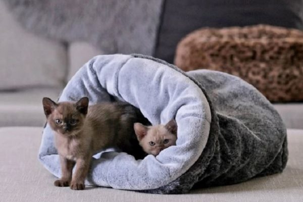 Choose the Best Bed for Your Cat