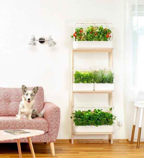 What-plants-do-well-in-self-watering-pots